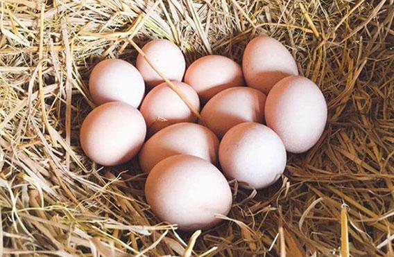 Mơ thấy ổ trứng gà đánh con gì