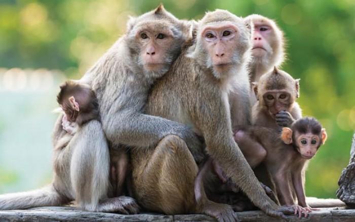 mơ thấy khỉ ảnh đại diện