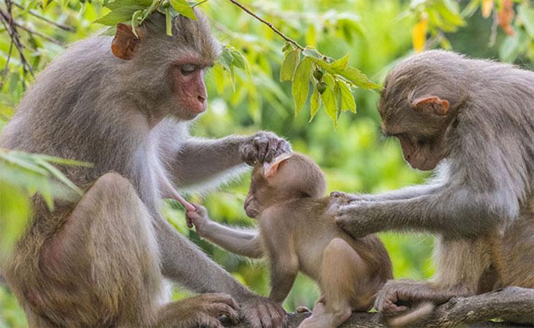 mơ-thấy-khỉ